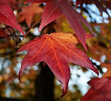 Changing Leaves of Autumn by 319media