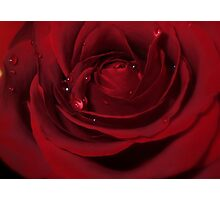 Love Hurts! - Rose Photographic Print