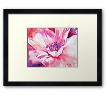 Pink Poppy Framed Print