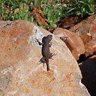 Li'l Lizard by dcournoyer