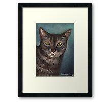 Rain the Cat Framed Print