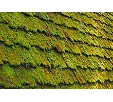 Mossy Wood Shingles Photographic Print