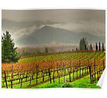 vista di vino Poster