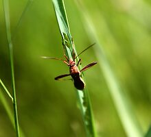 Bug on grass by Philip Alexander