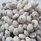 Escargots à la Provençale by yvesrossetti
