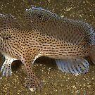 Hunting Handfish by MattTworkowski