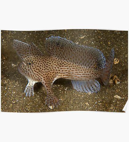 Hunting Handfish Poster