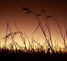 Summer Dawn by Pene Stevens