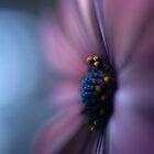 Intrigue... by Katrina Freckleton