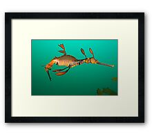 Bicheno Dragon Framed Print