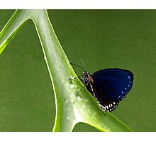 Penang Butterfly Sanctory Photographic Print