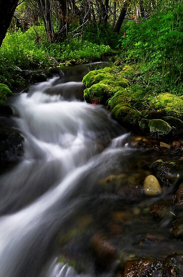 Little Lupin Creek Flow by Robert Mullner