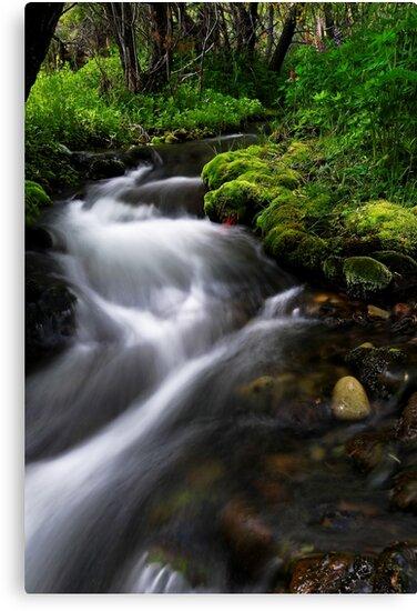 Little Lupin Creek Flow by Robert Mullner