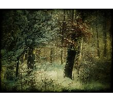 Colors of Winter Photographic Print
