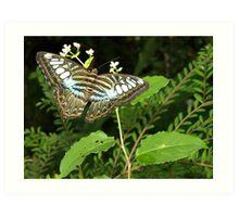 Penang Butterfly Sanctory Art Print