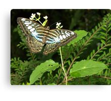 Penang Butterfly Sanctory Canvas Print
