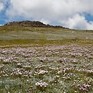 Field of Flowers by Colin  Ewington