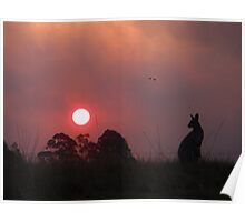 Wallaby sunset at Bucca NSW Poster