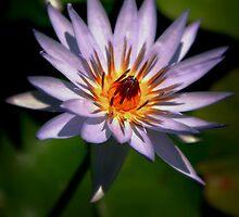 Of Singular Beauty by Karen Scrimes