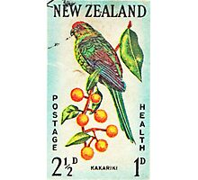 New Zealand Bird Print Photographic Print