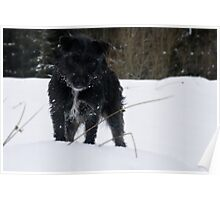 Bailey - The Patterdale Poster
