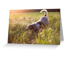 Brown Roan Italian Spinone Dog in Action Greeting Card
