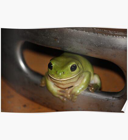 Green Frog in Beer Barrel Poster