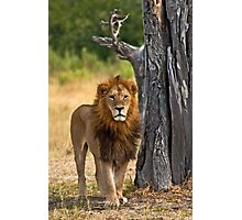 The king Photographic Print