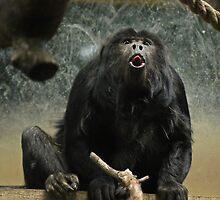 Cheeky Monkey by Ryan Davison Crisp