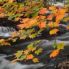 Fall Colors by Juergen Roth by juergenroth