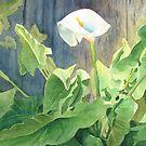 Calla Lily by Bobbi Price