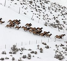 Elk Stampede by Don Despain