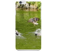 ducks on beverley beck iPhone Case/Skin