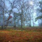 Foggy Day by Susan Zohn