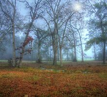 Foggy Day by Susan Zohn
