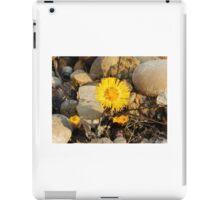 Coltsfoot flower iPad Case/Skin