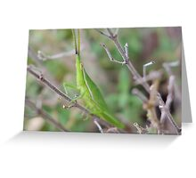 Grasshopper No.2 Greeting Card