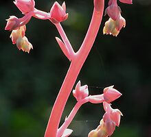 Flower Stalk by Robert Arconti