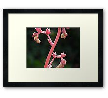 Flower Stalk Framed Print
