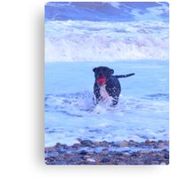 staffy in the sea Canvas Print