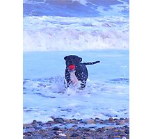 staffy in the sea Photographic Print