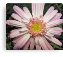 Pink Ribbon Flower Canvas Print