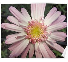 Pink Ribbon Flower Poster