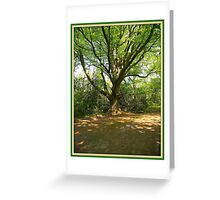 Woodland Glade Greeting Card