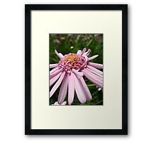 Pink Ribbon HD Framed Print