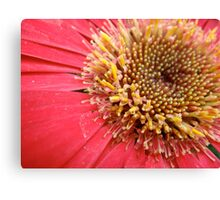 An In-Depth Look Canvas Print