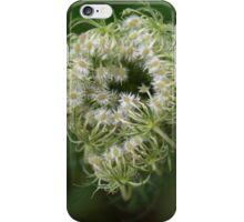 Queen Anne's Lace Bud iPhone Case/Skin