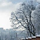 The Wall & The Tree by Oleksii Rybakov