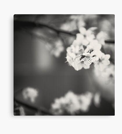 White Floret (B/W) Canvas Print
