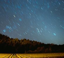 Vineyard Stars by Aswirly